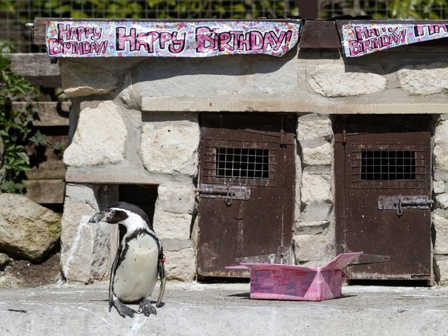 Visitors will be able to see Rosie on her 31st birthday  Credit: PA Wire/Danny Lawson