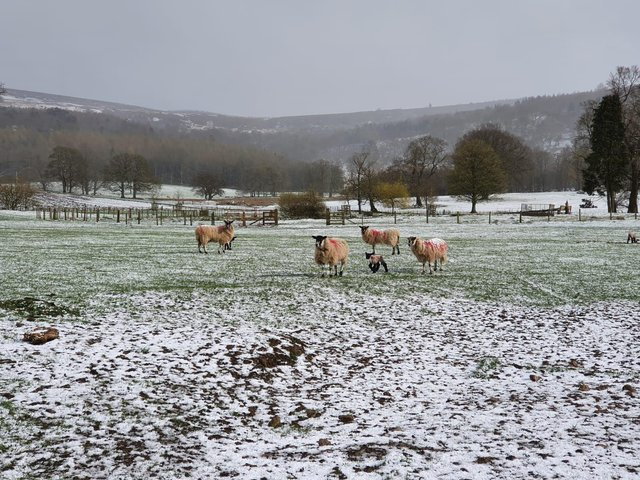 To want to come and work on a Yorkshire farm and face all kinds of weather proves your mettle, says Julian.
