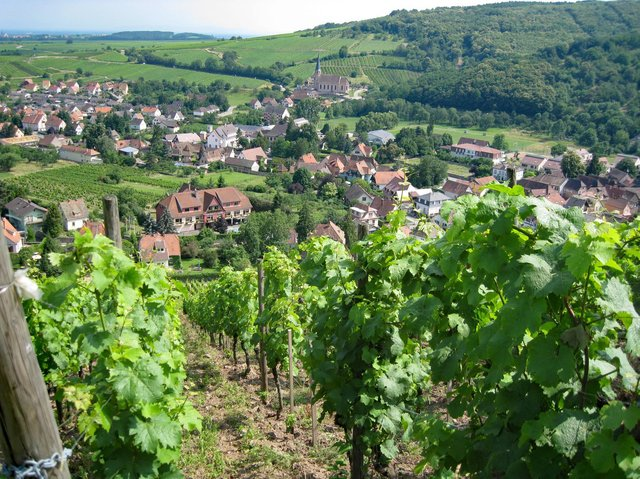 Try a Riesling from the picture-perfect region Alsace.