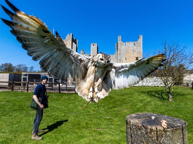 Eric, the Indian Eagle Owl, is one of seven stunning birds of prey at Bolton Castle near Leyburn
