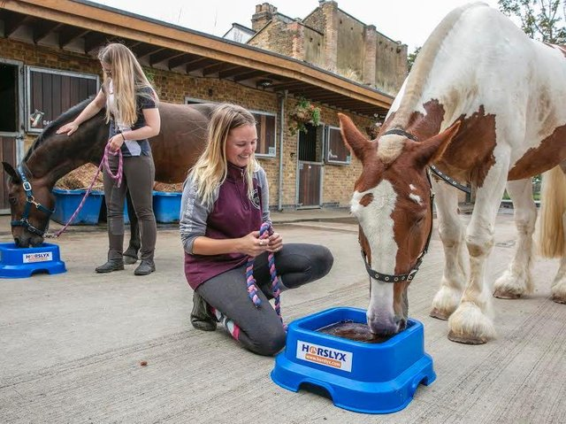 Carr's Group sells everything from horse feed to wellington boots