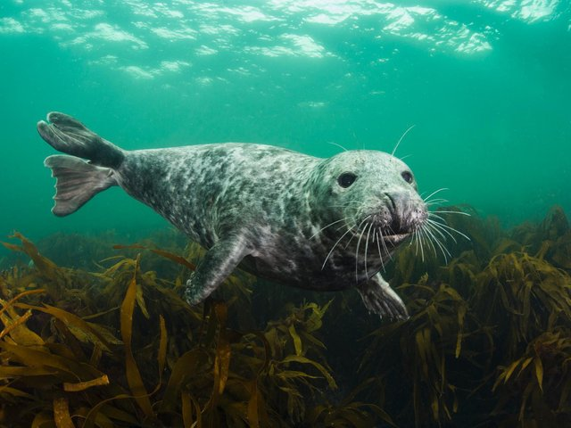 Yorkshire Wildlife Trust is asking everyone to Give Seas a Chance and help stop the decline in our sealife.
