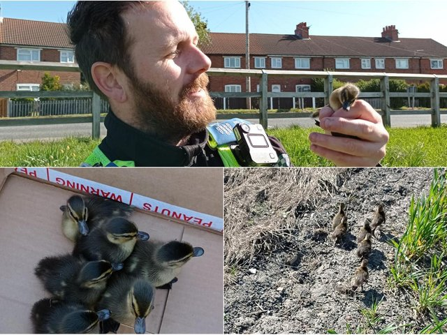 Police rescuing some baby ducklings. Photo: West Yorkshire Police Leeds East team.