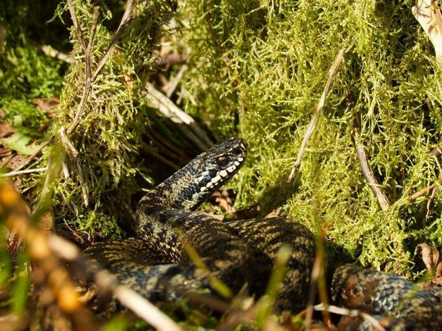 Visitors to Nidderdale are being warned about disturbing adders in the area