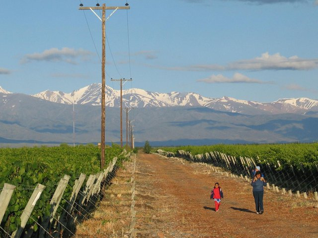 Vineyards in the foothills of the Andes mountain range.