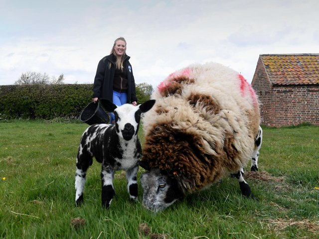 Steph wants to grow the Dutch Spotted breed