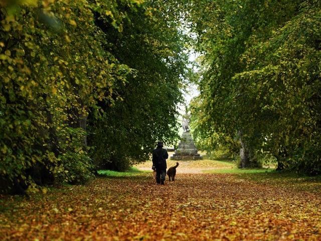Dog walker at Castle Howard