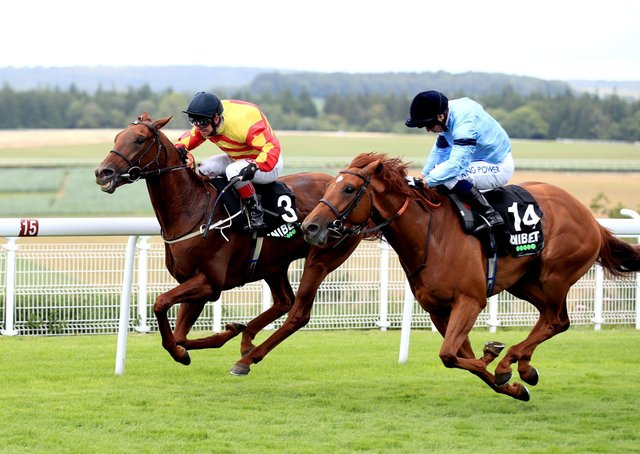 Mark Johnston's Sir Ron Priestley (left) heads the field for the Yorkshire Cup this Friday.