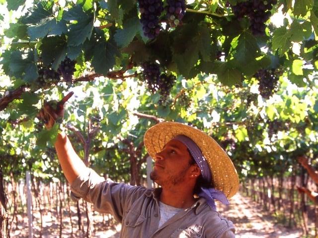 Try Criolla – the local Argentine grape – at Aldi.