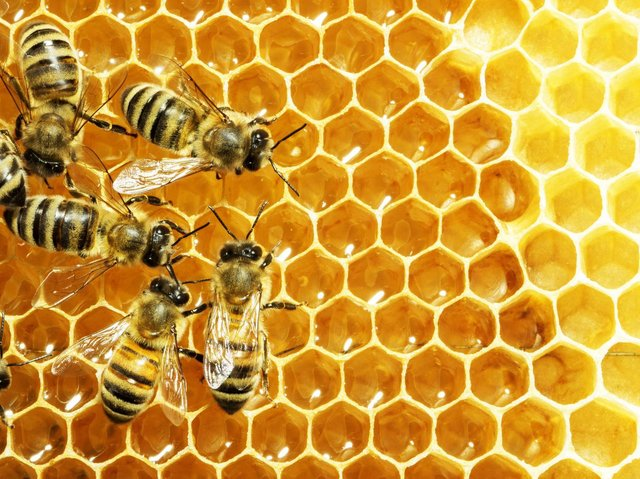 A healthy hive may result in swarming as it decides to split into two