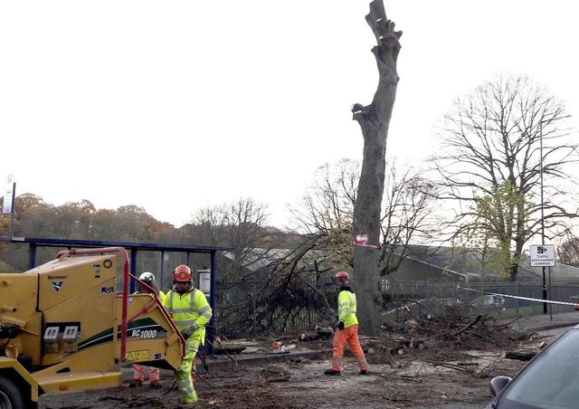 What will be the legacy of Sheffield's tree felling scandal?