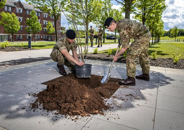 Jack Lyles and  Michael Oates plant magnolia trees with Chris Griffith and Matthew Gordon on Sir Tom Moore Walk  at Harrogate's Army Foundation College (AFC) Picture Tony Johnson