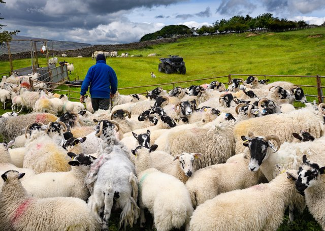 A sheep farm in Swaledale - but what will be the impact of the UK-Australia trade deal on British farming?