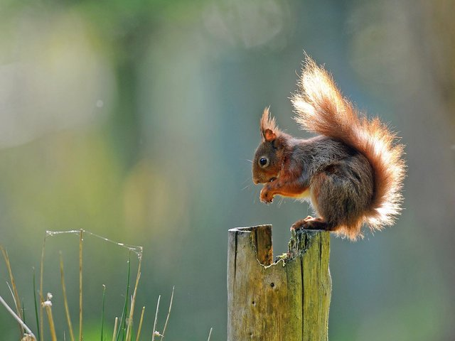 The area includes Snaizeholme which is home to a stronghold of endangered native red squirrels.