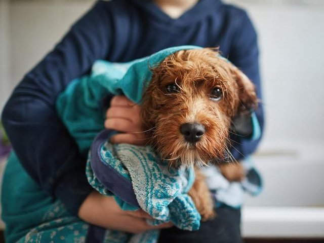 The pandemic has strengthened the emotional bond between people and their pets