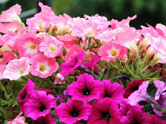 It's a good idea to harden off summer bedding plants.