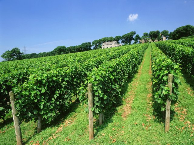 Gold medal winning wines from the Camel Valley.