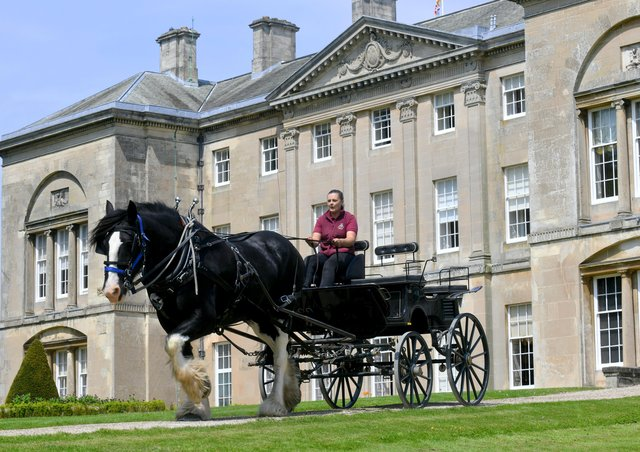 Jim , one of Sledmere's Shire horses pulling a cart by Sledmere House in preparation for a forthcoming wedding.