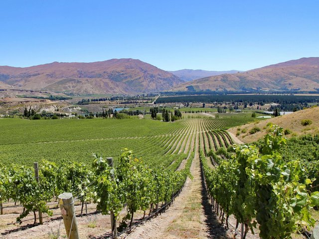 Otago in New Zealand is perfect for Pinot,