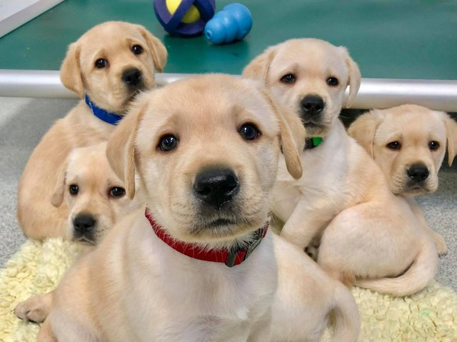New laws will be introduced shortly to prevent puppy smuggling