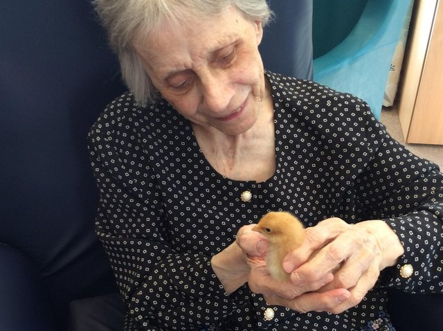 Residents at Broomcroft Care Home in Sheffield have hatched and nurtured baby chicks