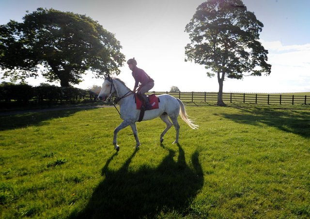 The former Royal Ascot champion Lord Glitters is ridden in a paddock at David O'Meara's Upper Helmsley stables.