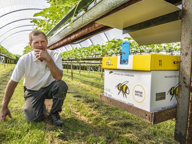 Chris Moorhouse orders bees in the post to pollinate his plants