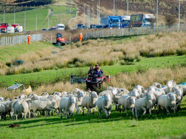 Jill Thorp and family at their famous farm in the middle of the M62 in 2017. She was concerned this week to hear of sheep in a nearby field almost being let onto the motorway as a result of thoughtless ramblers. Picture: James Hardisty