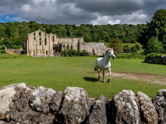 A horse trots in front of Rievaulx Abbey near Helmsley in the North York Moors National Park.