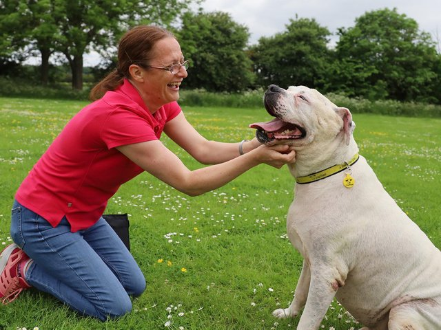 Dogs Trust Leeds' Sue and Major.