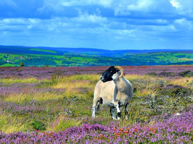 Rural communities should have the chance to shape their own destiny, a new report has said