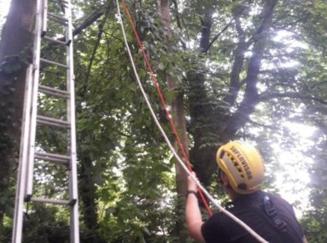 The cat was rescued by South Yorkshire Fire and Rescue today after it spent a week in a tall tree