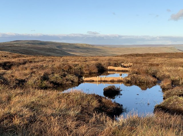 Undated handout photo issued by the Wildlife Trusts of fleet moss restoration on the Great North Bog.