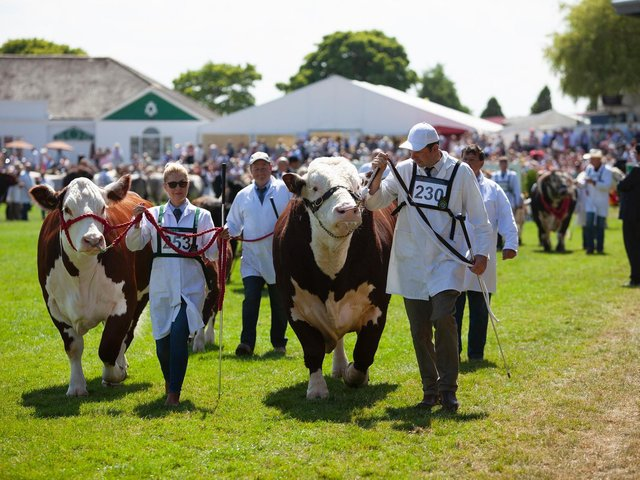 The Grand Cattle Parade in the Main Ring of the Great Yorkshire Show is set to be one of the highlights of this year's show, which begins on Tuesday next week and runs for four days for the first time in its history. (Photo: Yorkshire Agricultural Society)