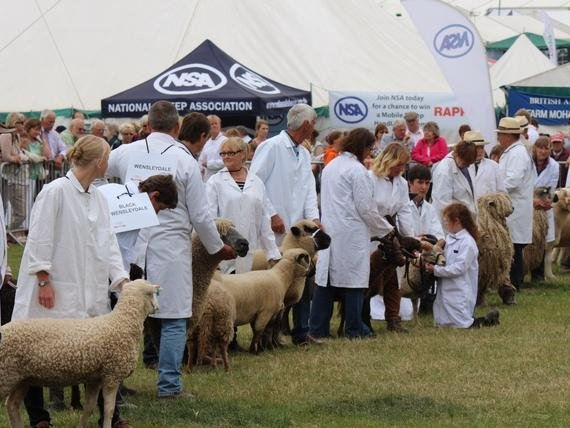 The York RBST Support Group, along with the Dales group are celebrating 45 years at the Great Yorkshire Show