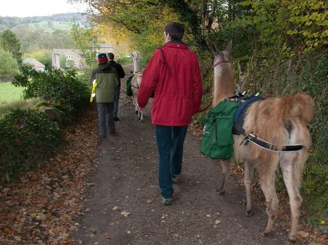 Nidderdale Llamas is a family-run trekking centre