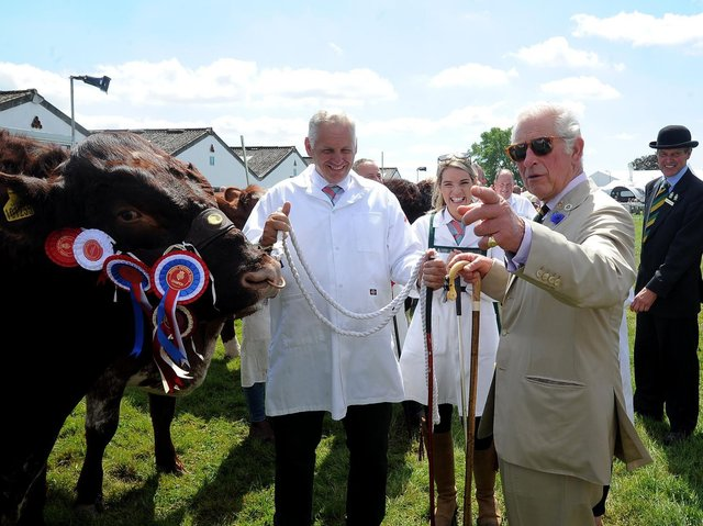 The Prince of Wales and the Duchess of Cornwall visit the Great Yorkshire Show, Harrogate... Prince Charles is pictured on the cattle lines at the show.. Image: Simon Hulme