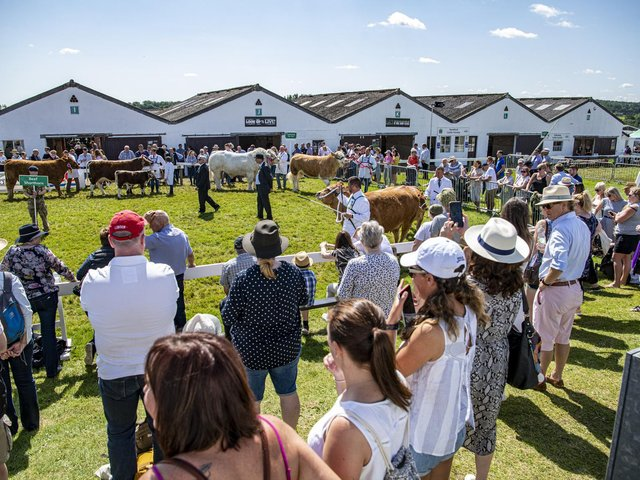 Crowds watch the judging of the Supreme Beef at the GYS. Picture: Tony Johnson.