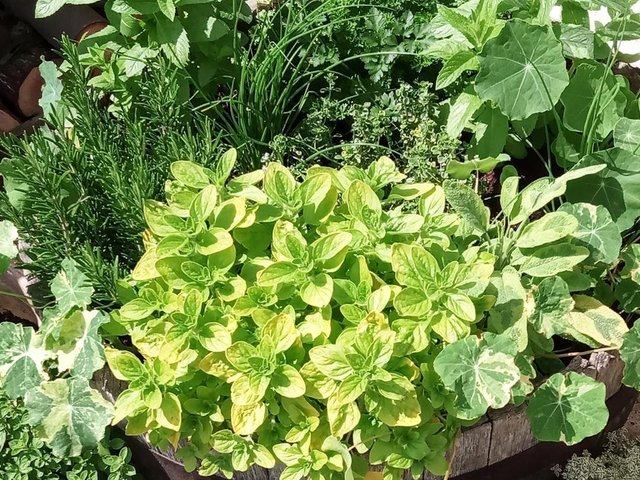 It's a good time to pick some of your herbs and freeze them for use later.