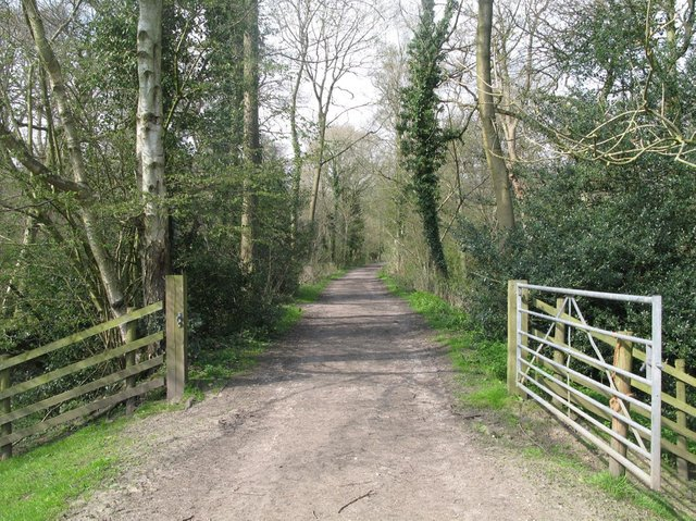 Part of the old Nidd Valley Railway trackbed passes through woodland in Lower Nidderdale