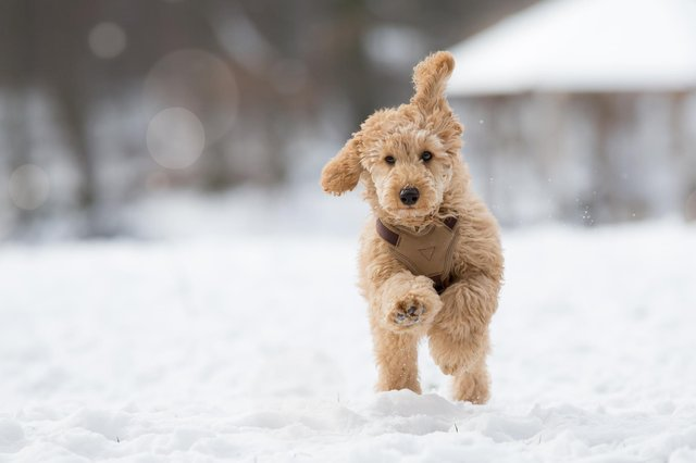 Generally, If its too cold for you then it is too cold for your dog (Picture: Shutterstock)